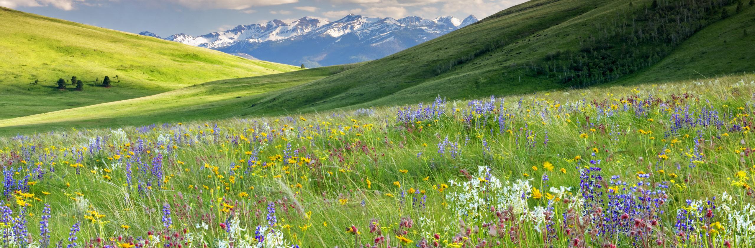 Eastern Oregon Mountains