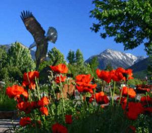 Flowers in Joseph