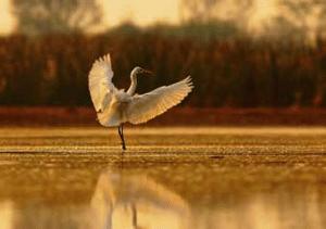 Crane in the McKay Creek Wildlife Refuge